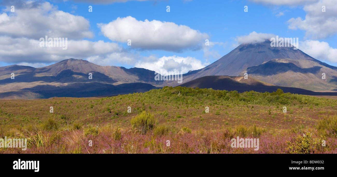 Mount Tongariro on the left and perfectly cone-shaped Mount Ngauruhoe with blooming heather in autumn, Tongariro - Stock Image