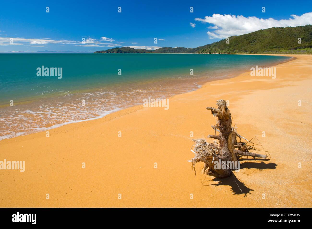 Golden beach of Totaranui and the blue ocean, Tasman District, South Island, New Zealand Stock Photo