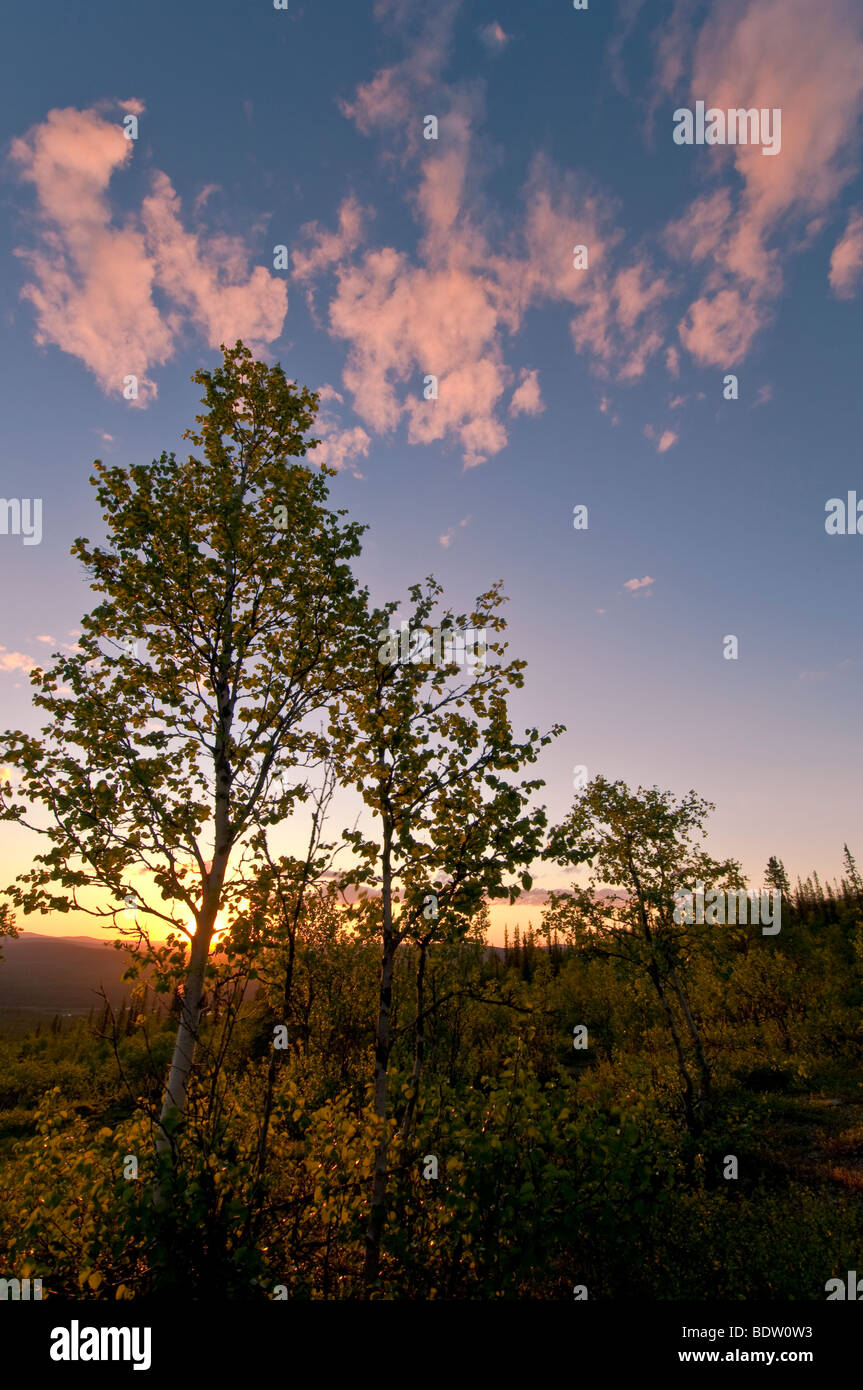 landschaft bei mitternachtssonne in gaellivare, lappland, schweden, landscape at midnight sun in lapland, sweden Stock Photo