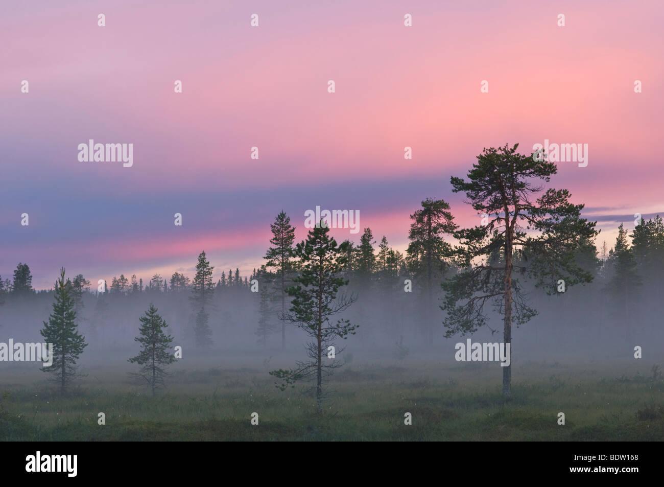 nebel in einem sumpf bei sonnenuntergang, lappland, schweden, mist in bog at sunset, lapland, sweden - Stock Image