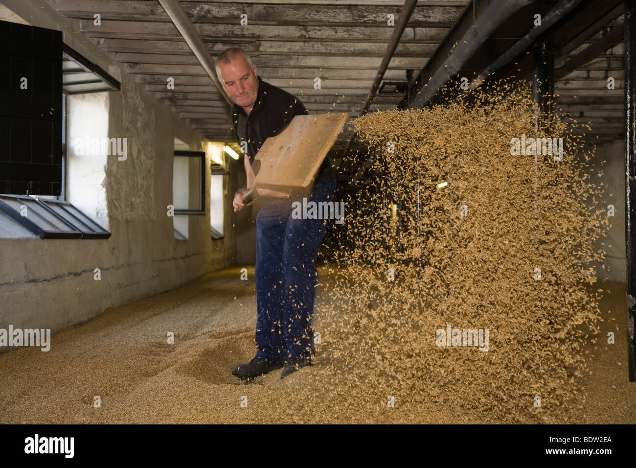 worker in whisky distillery, orkney islands, scotland - Stock Image