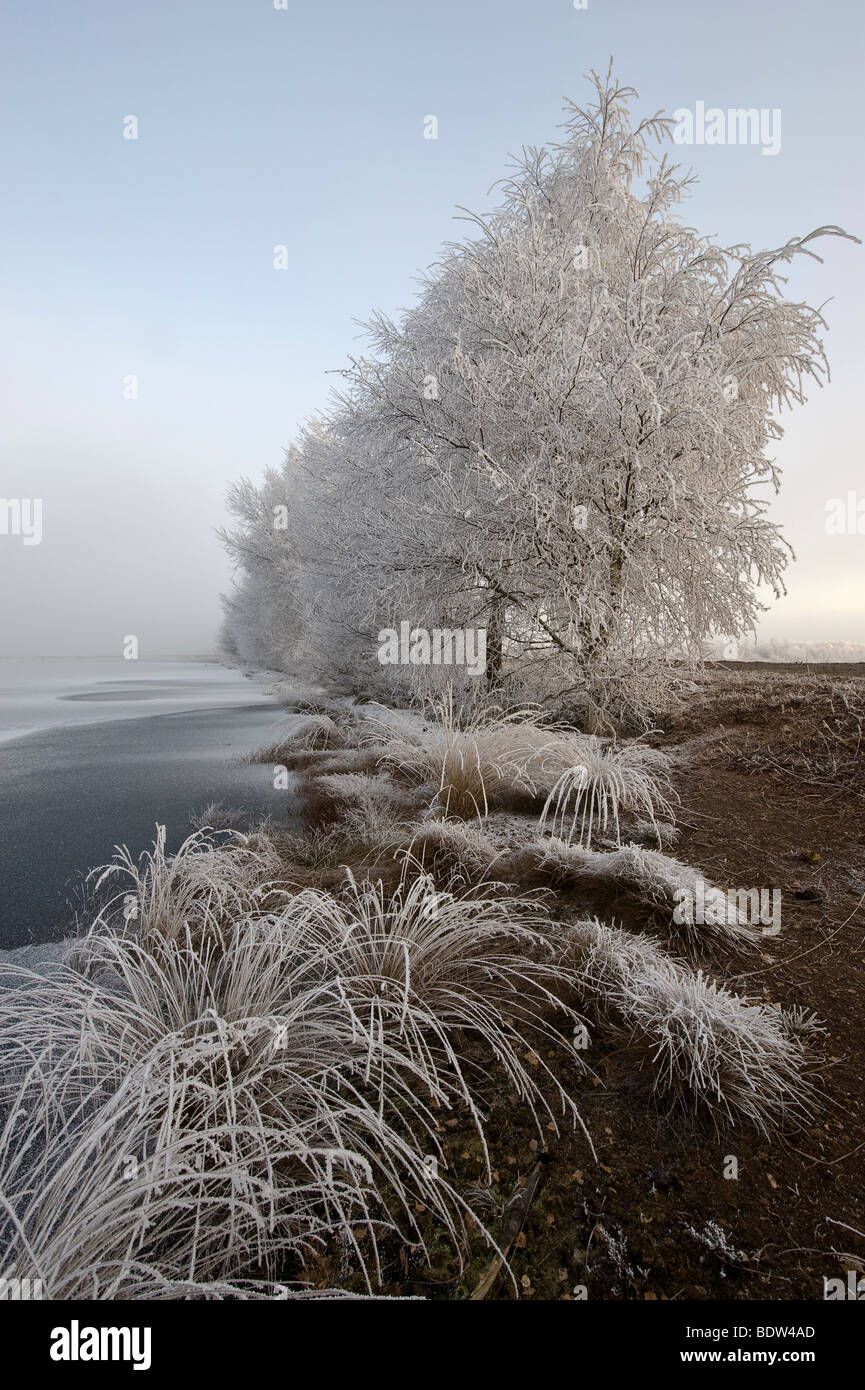Winter in the Bog, North Germany Stock Photo