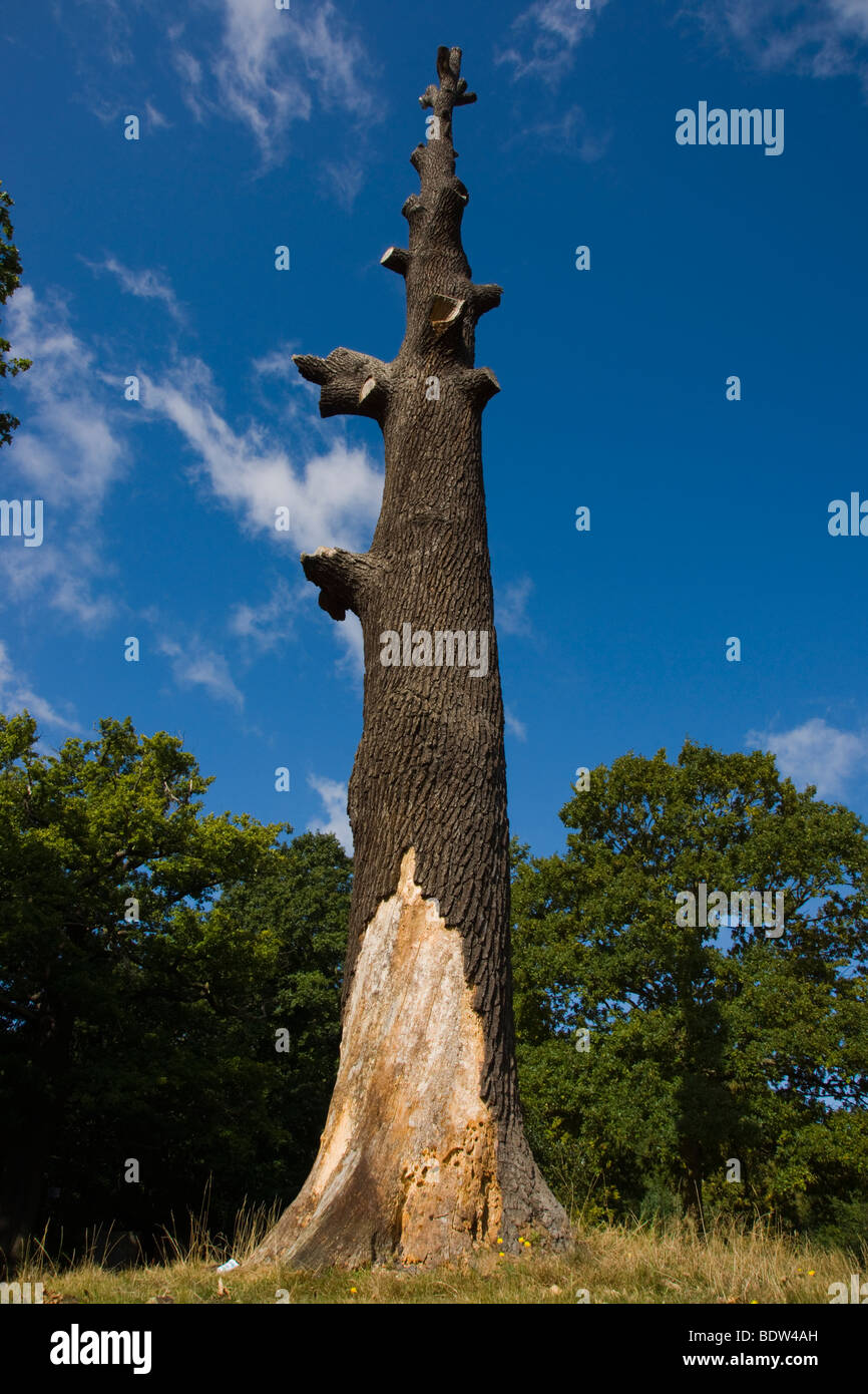 Branchless Tree due to extensive tree surgery, London, UK - Stock Image