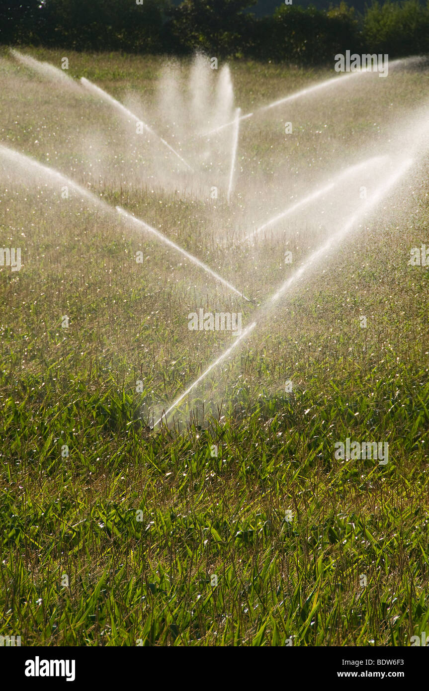 Irrigation of maize field in Charente France - Stock Image