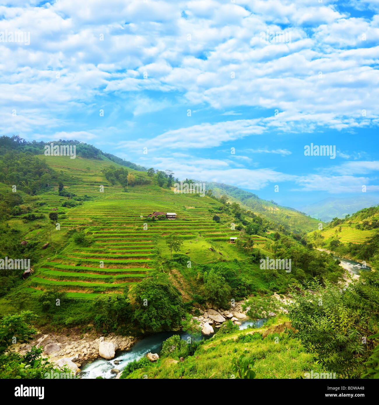 Rice field terraces at nothern Vietnam - Stock Image