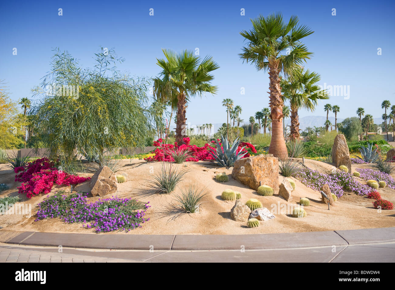 desert landscaping shown with plants and palm trees stock photo