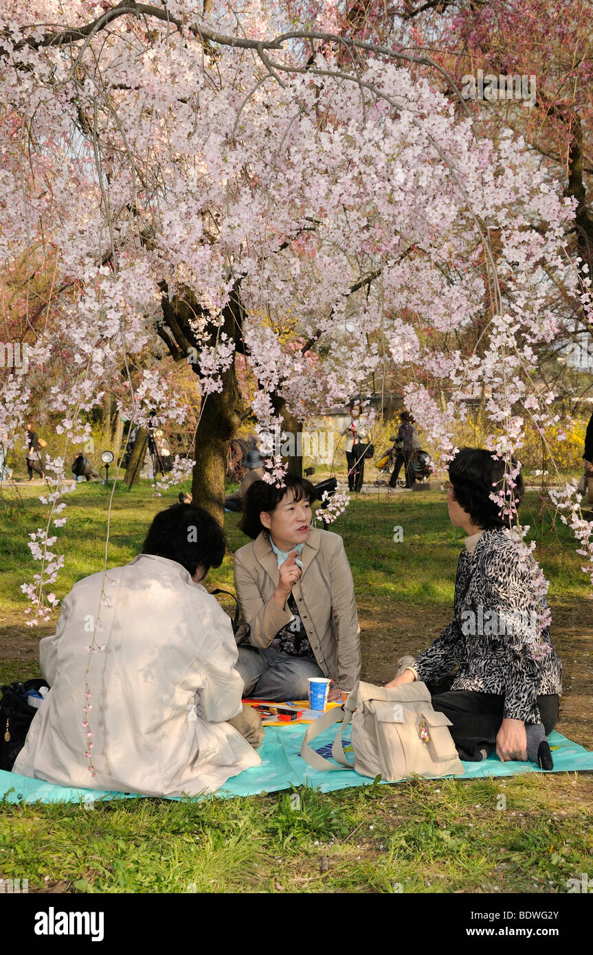 Cherry Blossom Festival at the Kyoto Botanical Garden, picnic under the blossoming tree in Kyoto, Japan, East Asia, Stock Photo
