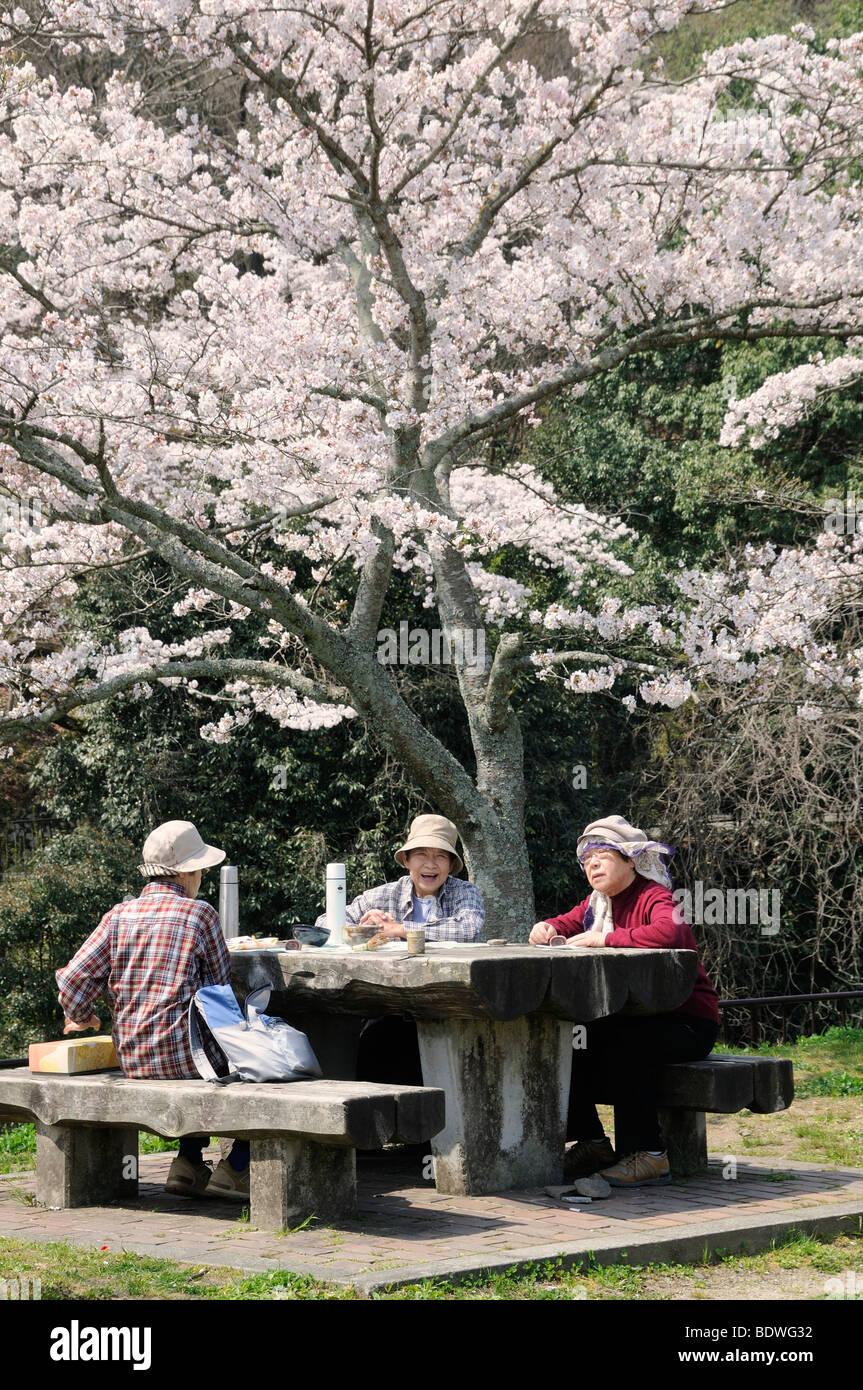 Senior citizens having a picnic under a flowering cherry tree in Iwakura, Japan, East Asia, Asia Stock Photo