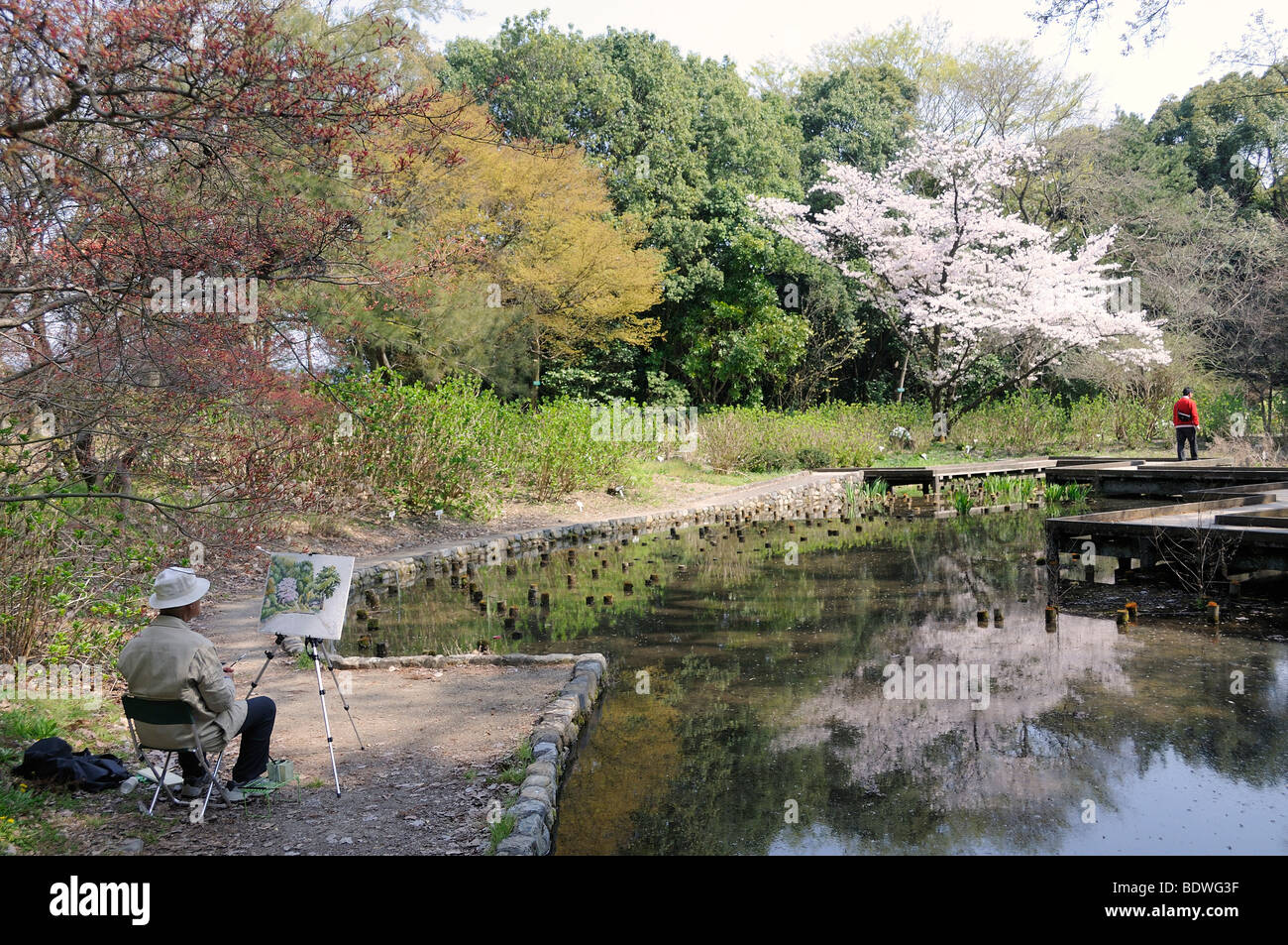 Japanese man painting a flowering cherry tree in the Kyoto Botanical Garden, a popular hobby among Japanese seniors, Stock Photo