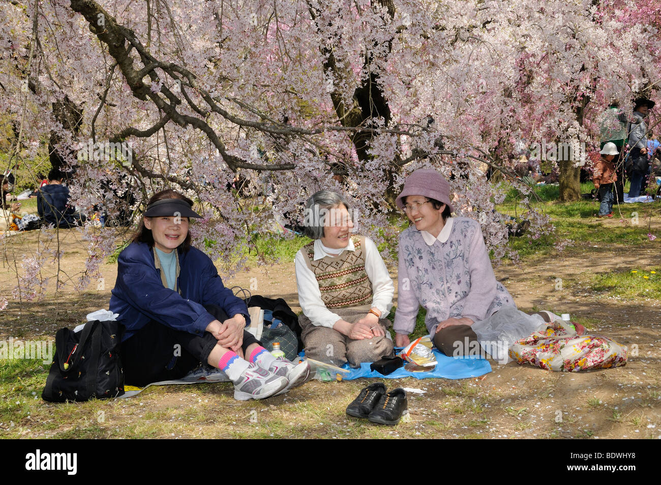 Cherry Blossom Festival at the Kyoto Botanical Garden, picnic under a blossoming tree in Kyoto, Japan, East Asia, Stock Photo