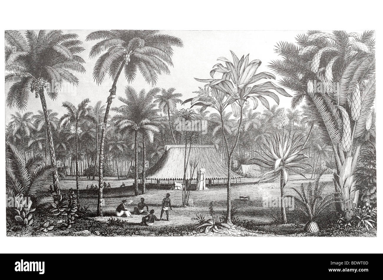 habitat reproductive parts woody monocots palms and cycads tribe hut shelter paradise home native - Stock Image