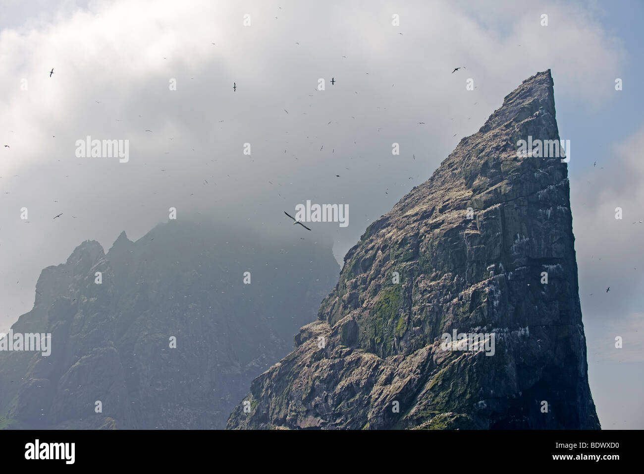 Islands of Stac an Armin and Boreray in the Saint Kilda archipelago, surrounded by northern gannets Morus bassanus. - Stock Image