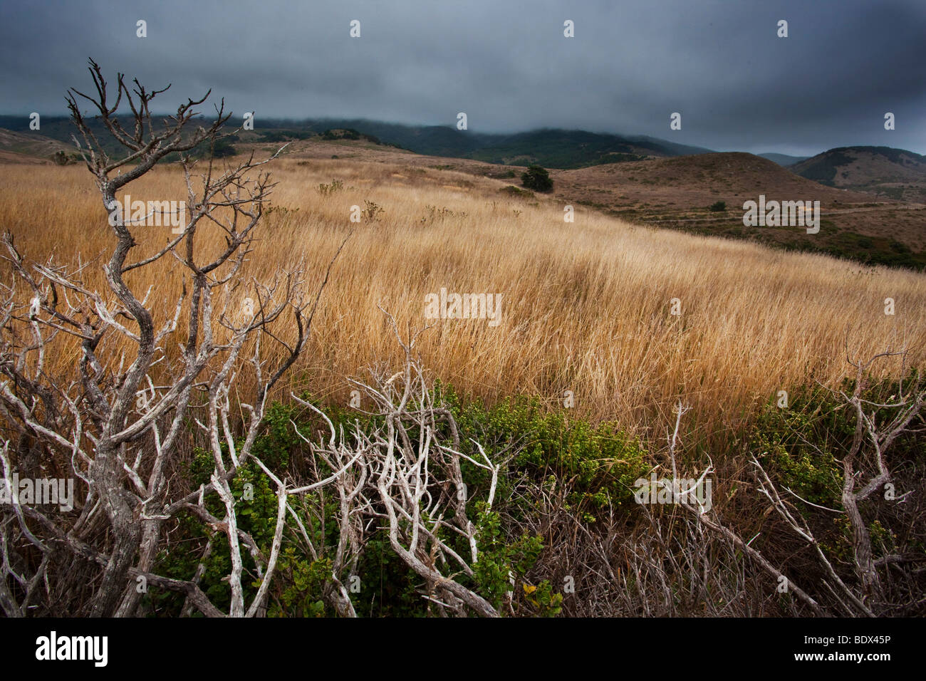 Estero Trail on an overcast day, Point Reyes National Seashore, California, USA - Stock Image