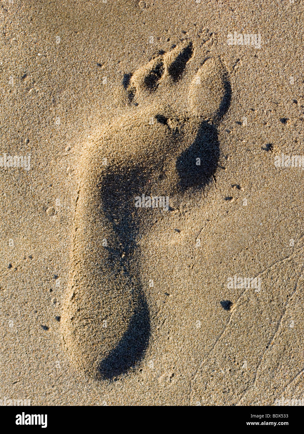 Footprint in the sand in Fig Tree Bay, Protaras, Cyprus. - Stock Image