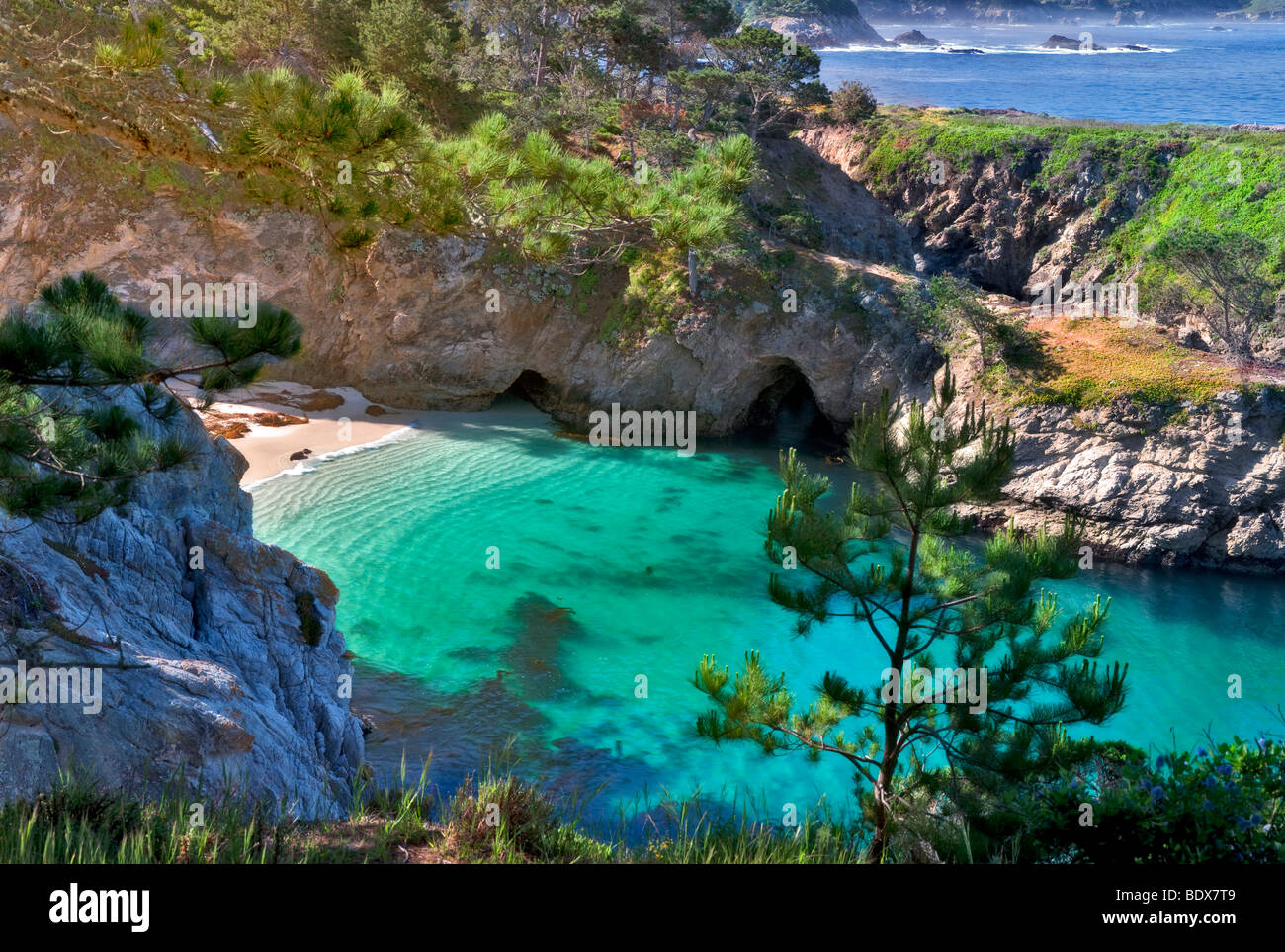 China beach with California Harbor Seals on beach. Point Lobos State Reserve, California - Stock Image