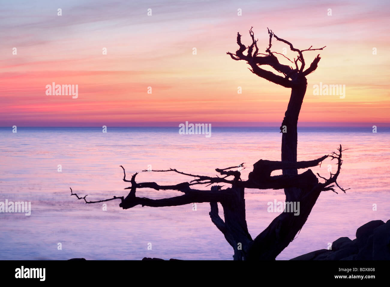 Silhouetted cypress tree and sunset. 17 Mile Drive. Pebble Beach, California - Stock Image