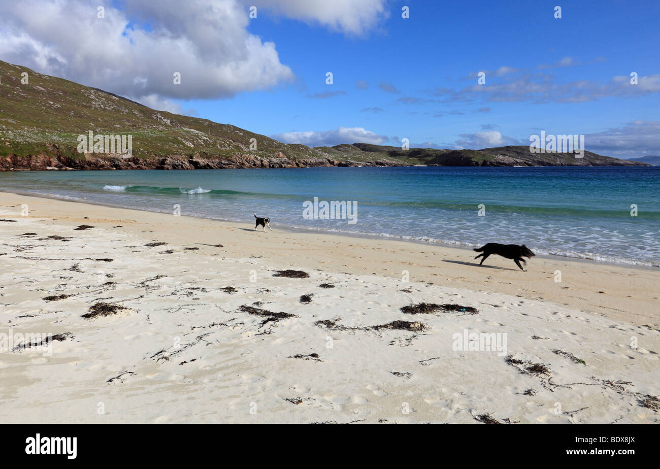 Happy dogs on Husinish beach, Isle of Harris, Outer Hebrides, Scotland - Stock Image