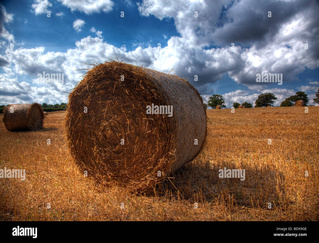 Hay rolls drying in a wheat field in Hertfordshire - Stock Image