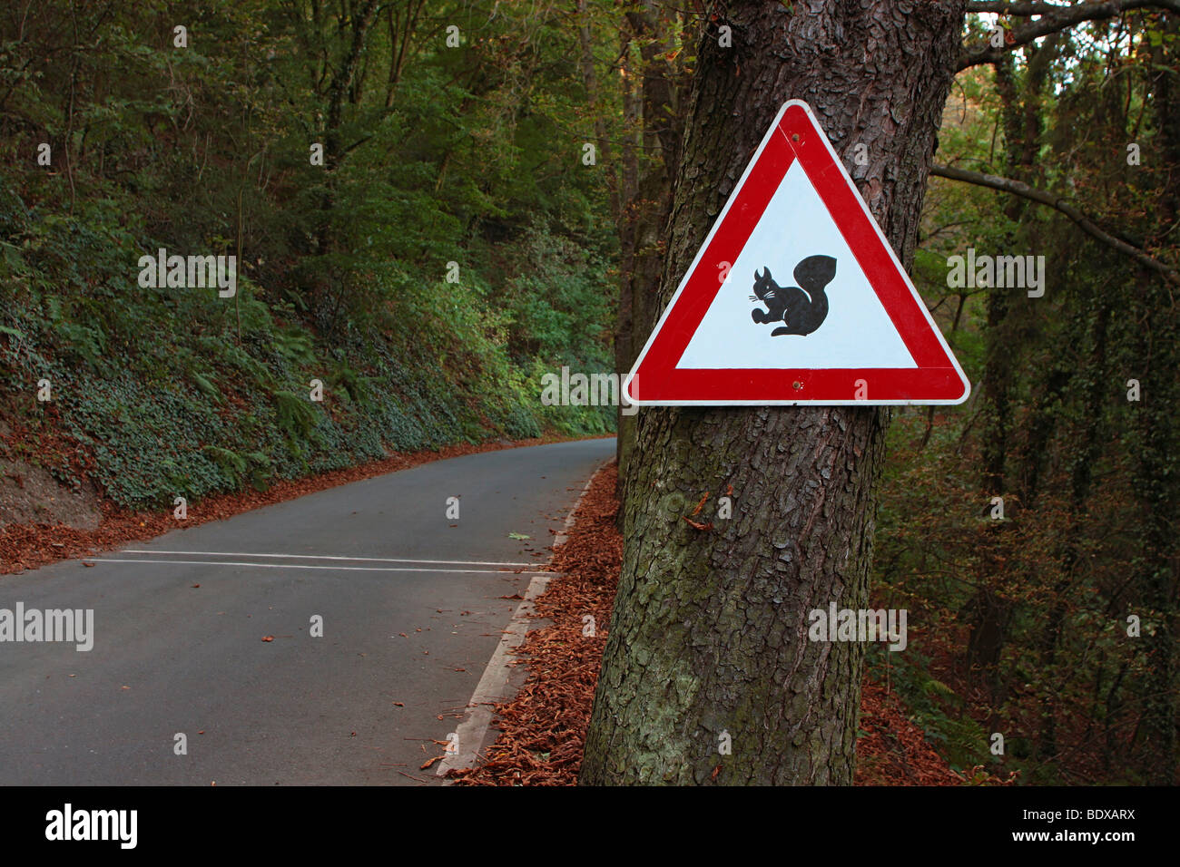 Warning sign, caution squirrels at a forest road - Stock Image