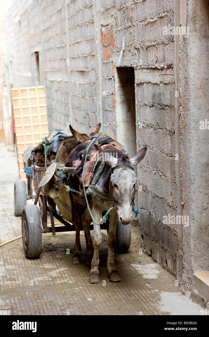 Alleyway and Mules with carts, off Rue Dar el Bacha, Marrakesh, Morocco - Stock Image
