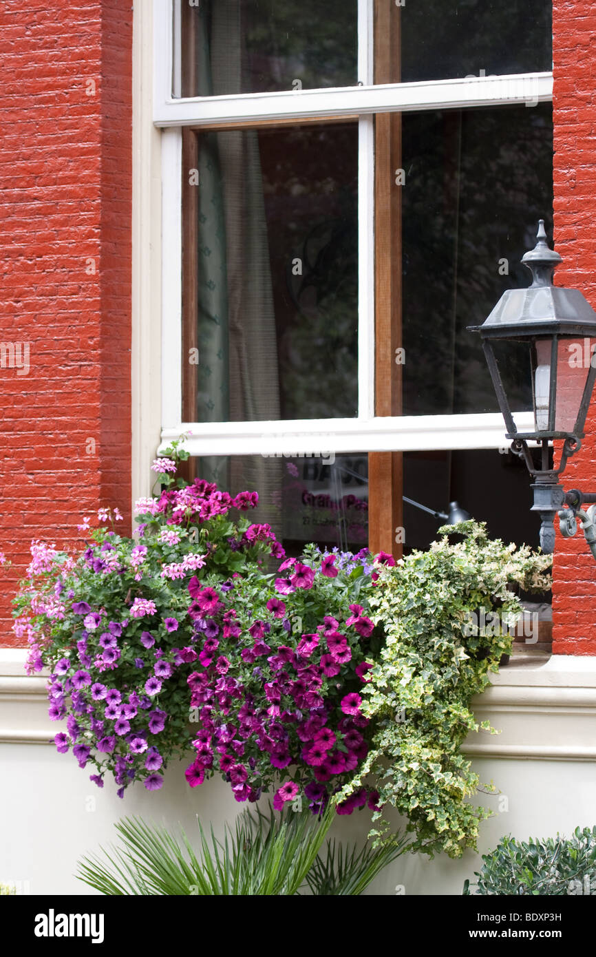 Window box in Amsterdam - Stock Image