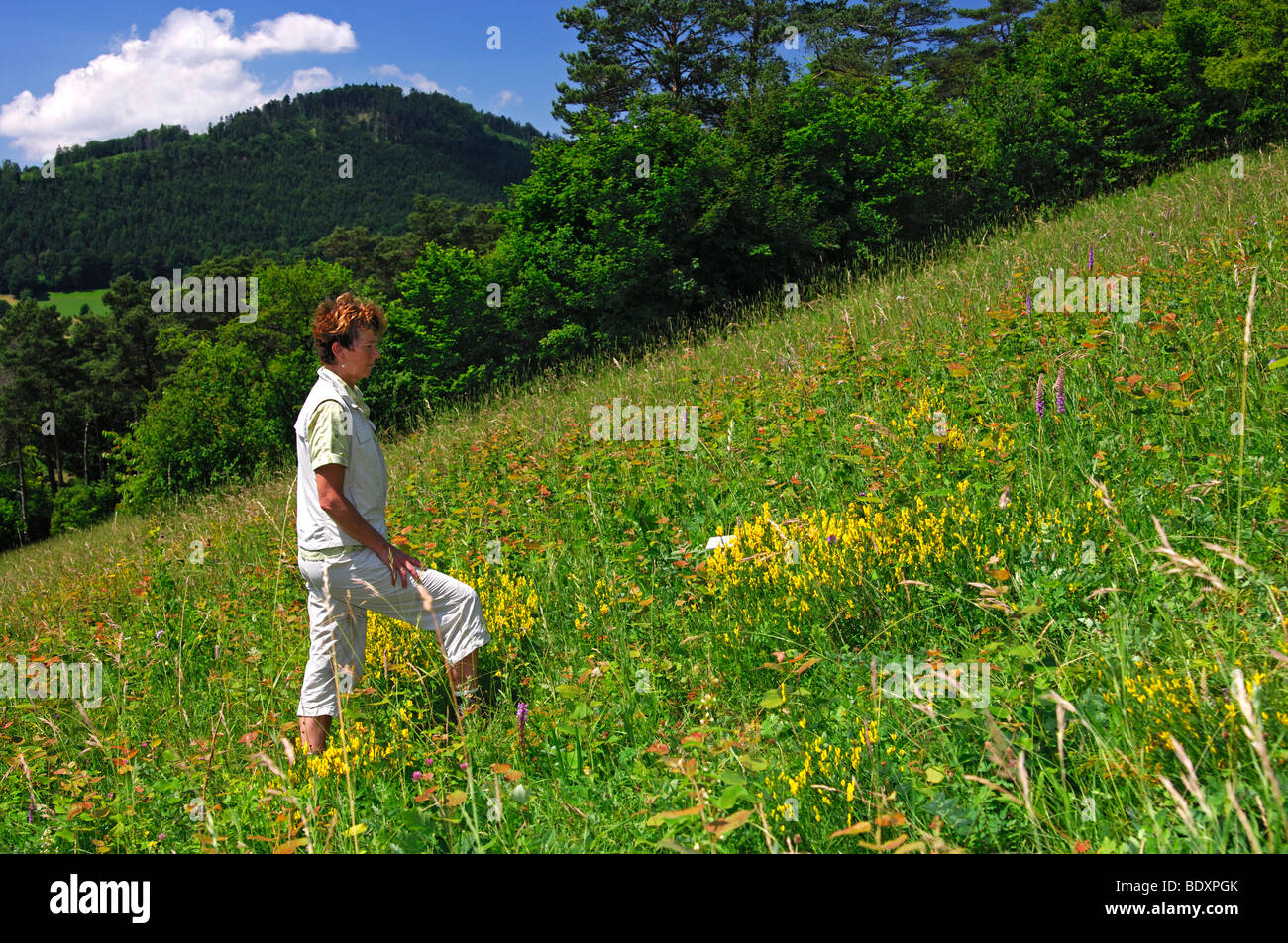 Woman looking at plants on a round tour on the orchid natur trail Erlingsbach, Switzerland - Stock Image