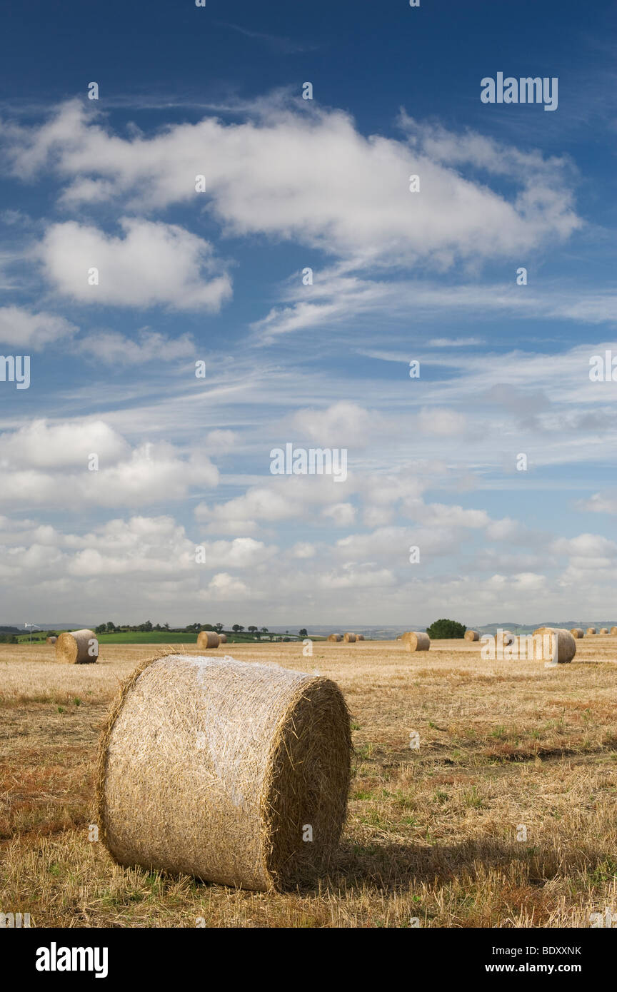 Straw bales in a field at harvest time in the English countryside - Stock Image