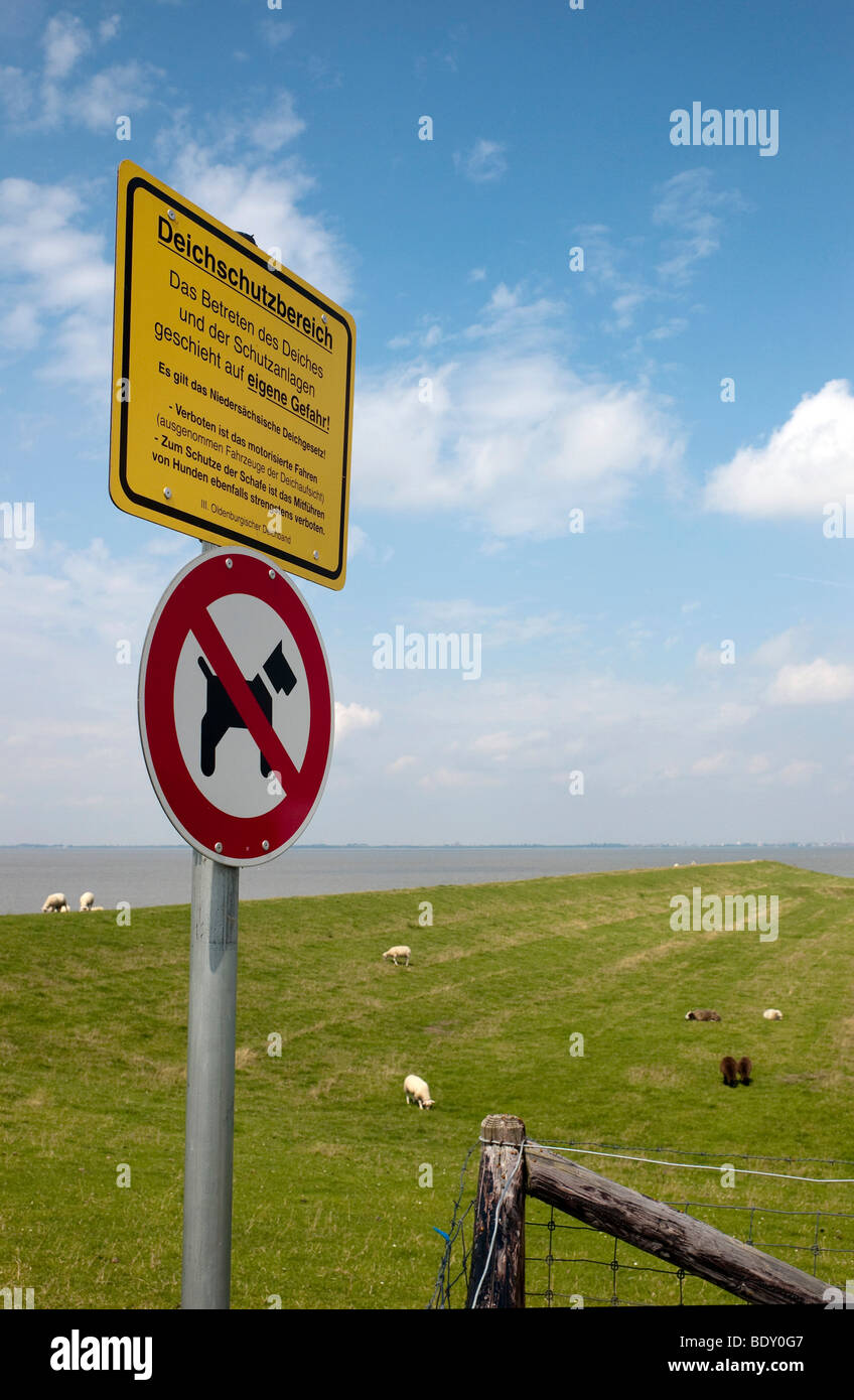 Dike top with pastures and sheep, prohibition sign No dogs, protected dike area, Dangast, Lower Saxony, Germany, - Stock Image