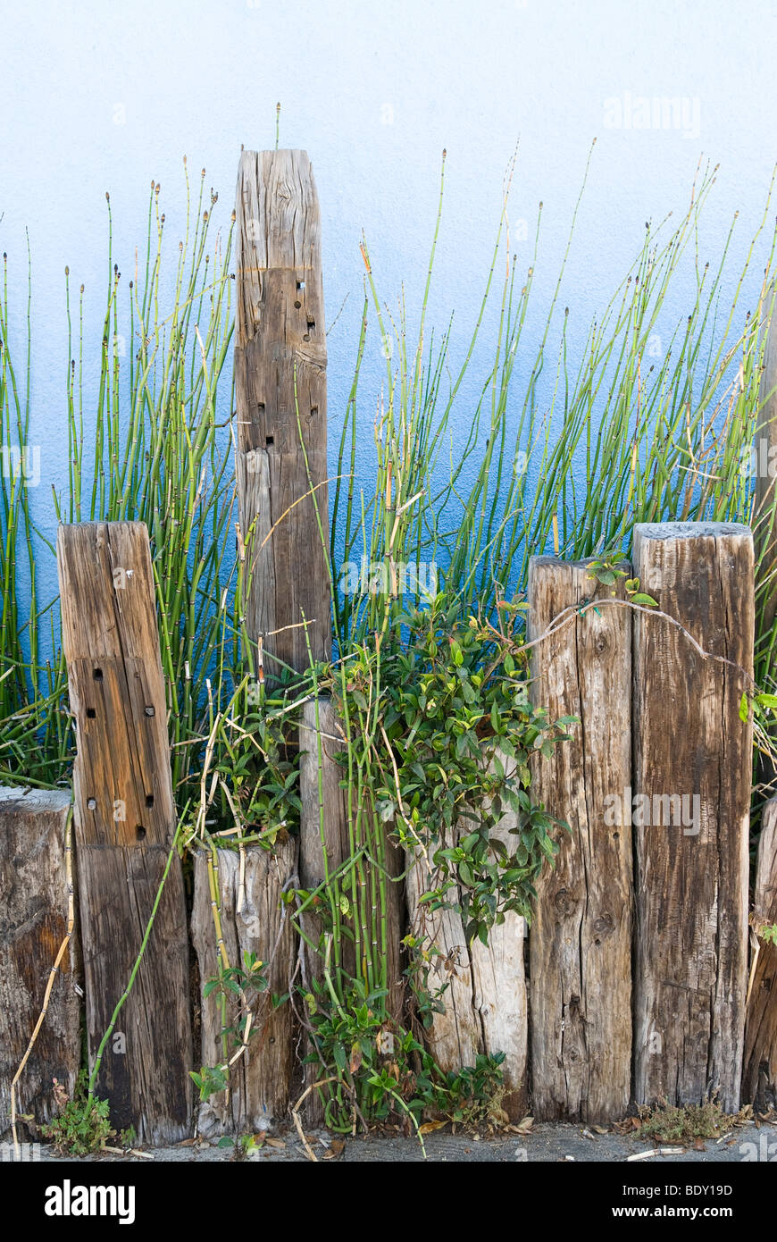 A planter of green shoots against a blue stucco wall supported by old wooden posts. - Stock Image