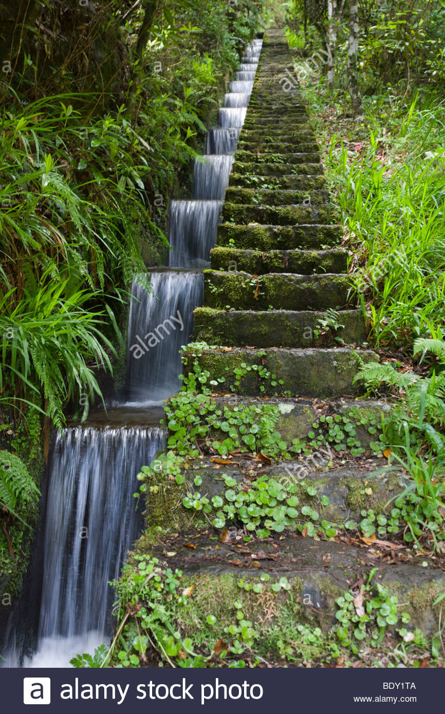Levada canal system near Ribeiro Frio on the island of Madeira - Stock Image