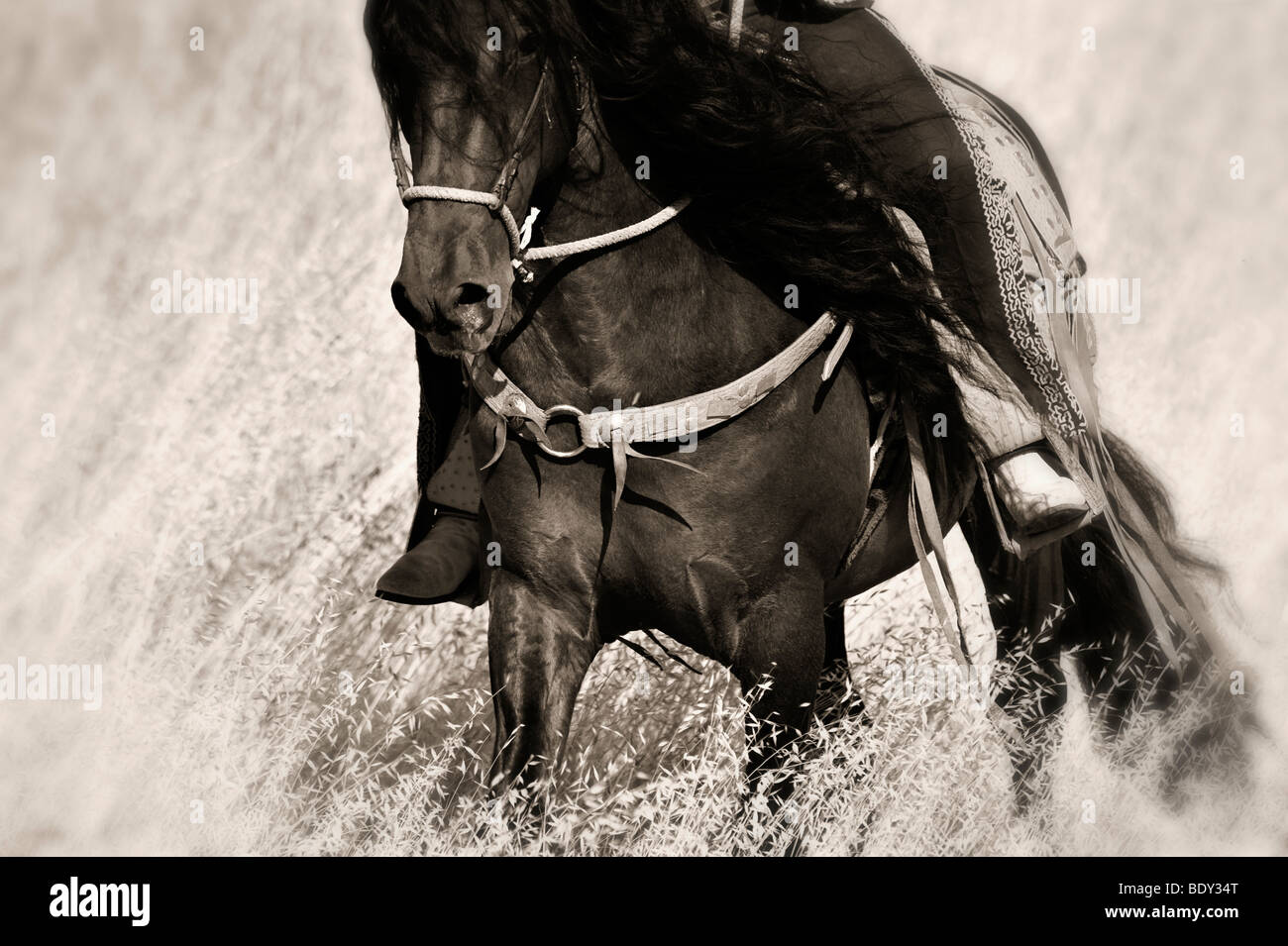 Charro Rider on Horseback - Stock Image