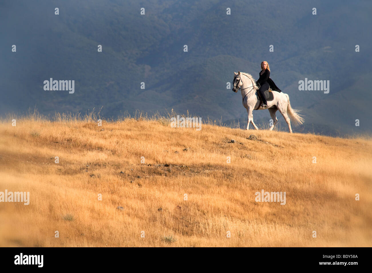Woman Riding Andalusian Horse - Stock Image
