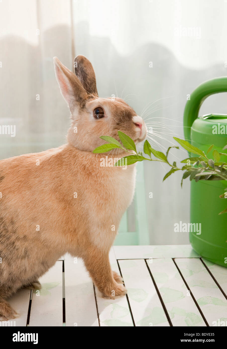 Rabbit sniffing on a branch - Stock Image