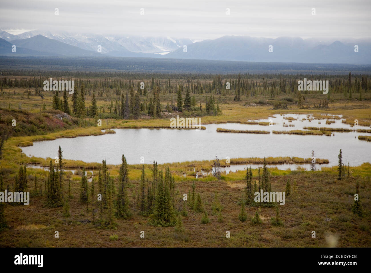 Boreal Forest in Alaska - Stock Image