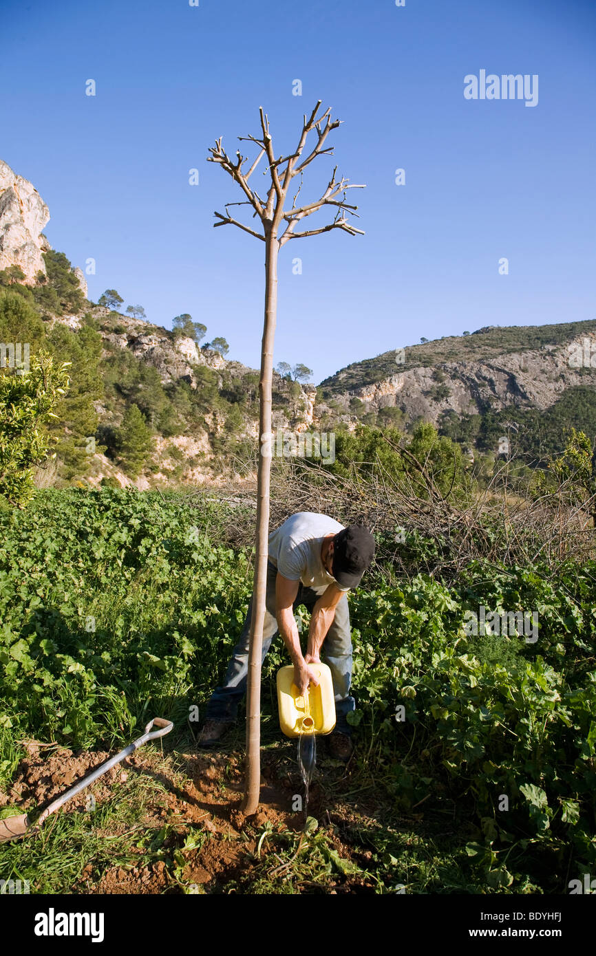 Tree planting on organic farm in Spain - Stock Image