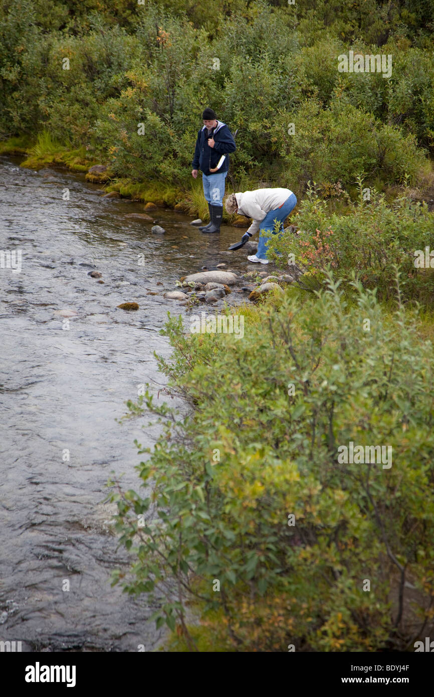 A woman panning for gold in a stream near the Denali Highway in the remote wilderness east of Denali National Park. - Stock Image