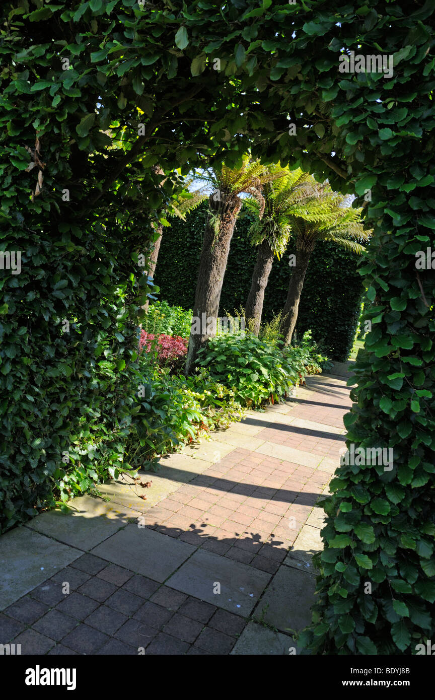 Topiary in the Old Vicarage Gardens ,East Ruston,Norfolk,UK - Stock Image