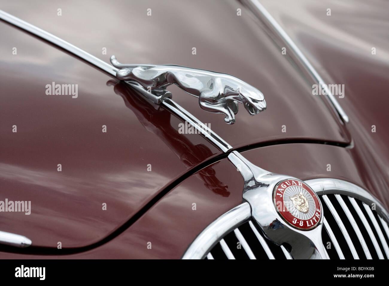 Cooler figure of a Jaguar Mark II - Stock Image
