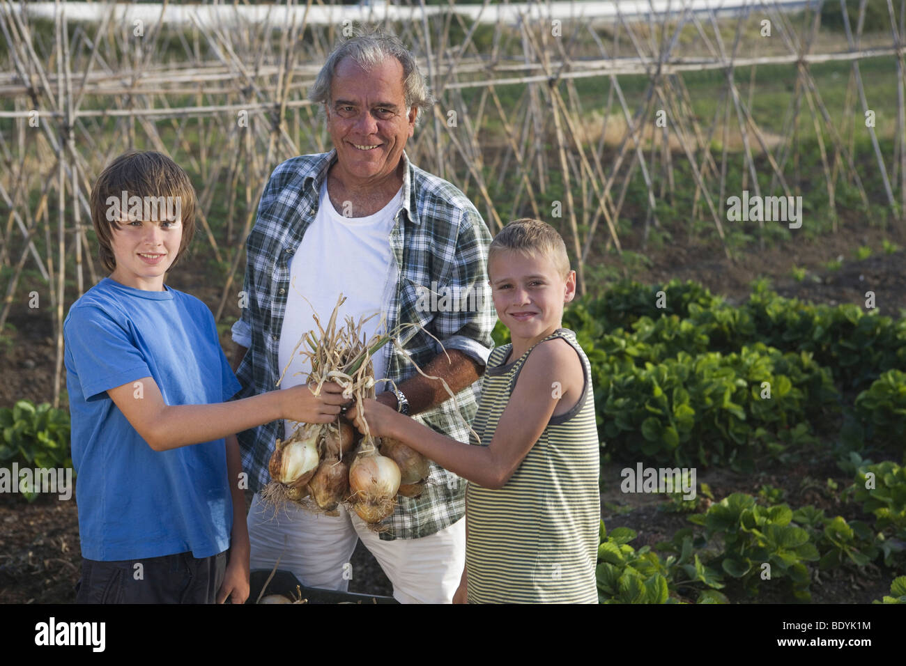 Grandfather and grandsons holding onions - Stock Image