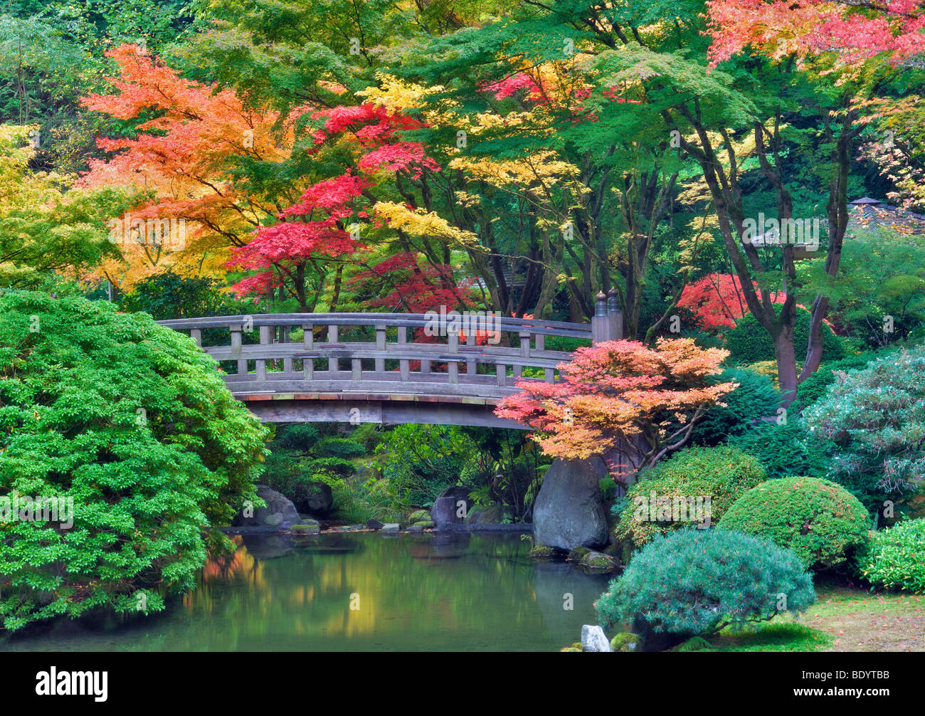 Portland Japanese Gardens with bridge and fall colors. Oregon - Stock Image