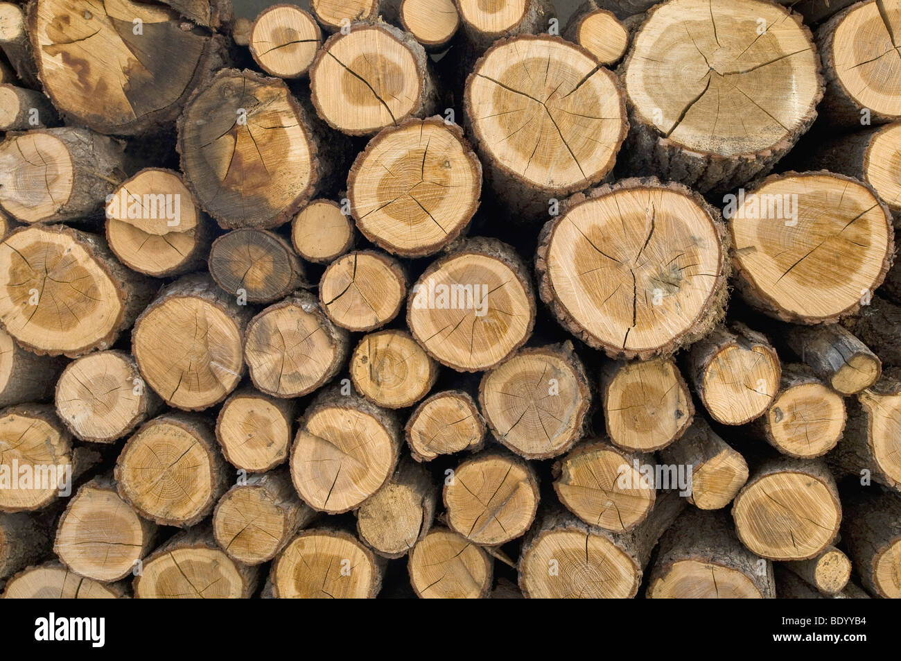 Stacked firewood, view from the front, cut sections - Stock Image