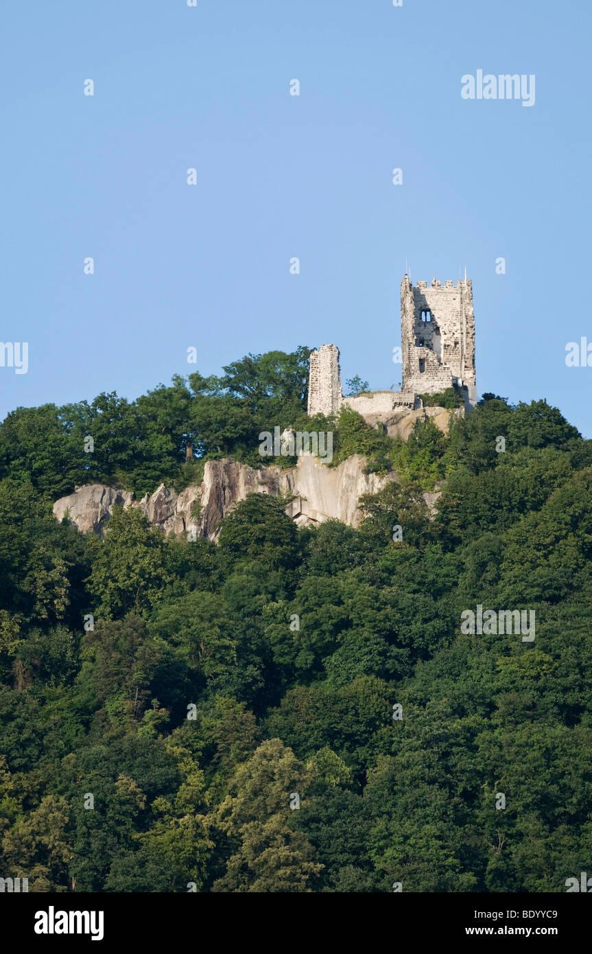 Drachenfels, Dragon's Rock, ruins of Drachenfels Castle on the Rhine, Koenigswinter, North Rhine-Westphalia, - Stock Image
