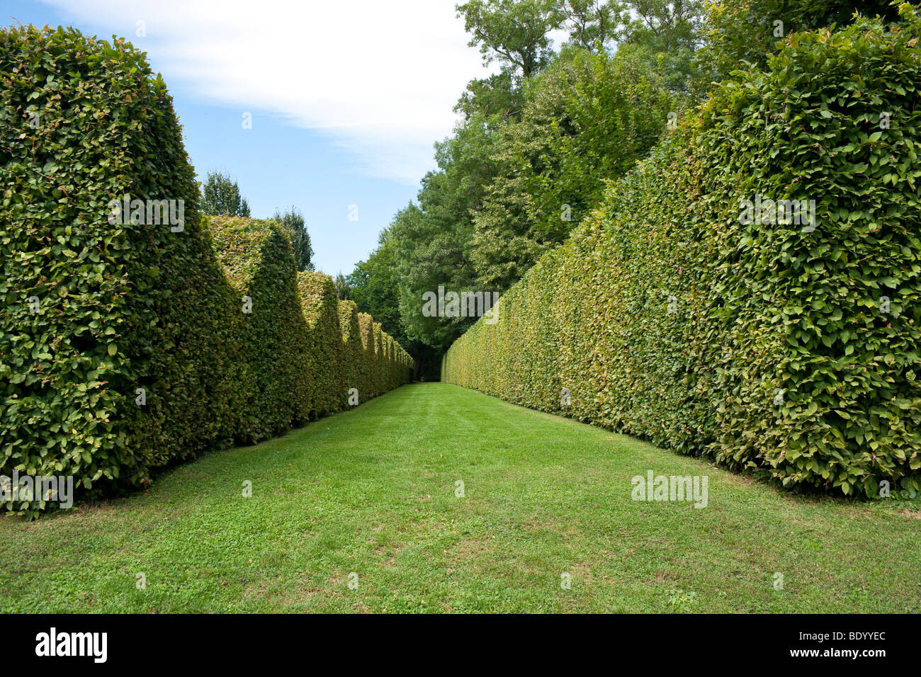 Burgundy France 2009 the Chateau de Cormatin hedges of the maze - Stock Image