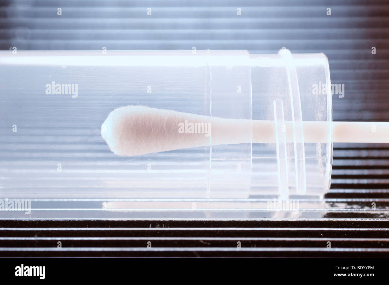Cotton swab for DNA testing and paternity testing - Stock Image