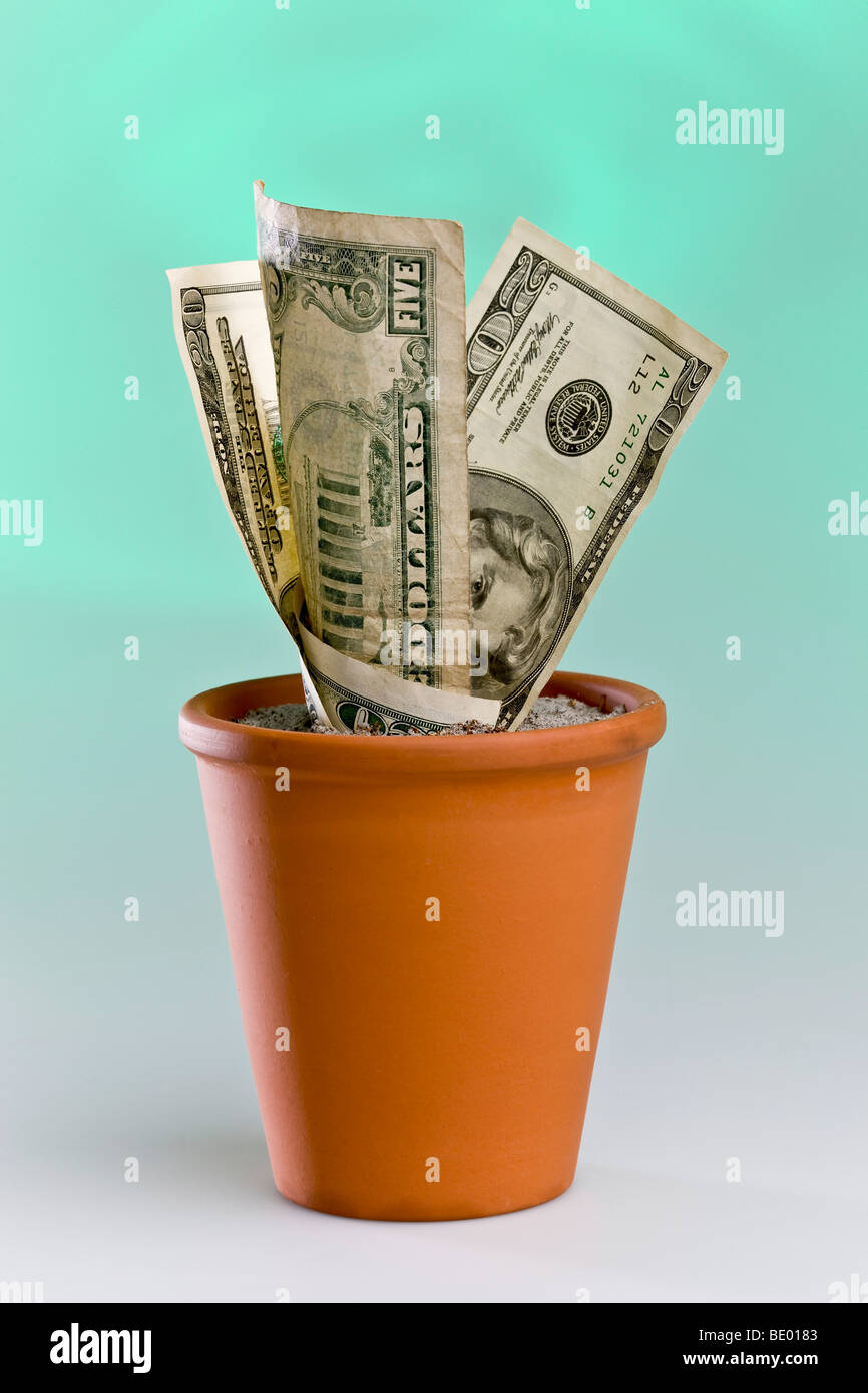 Dollar notes growing in a flowerpot - Stock Image