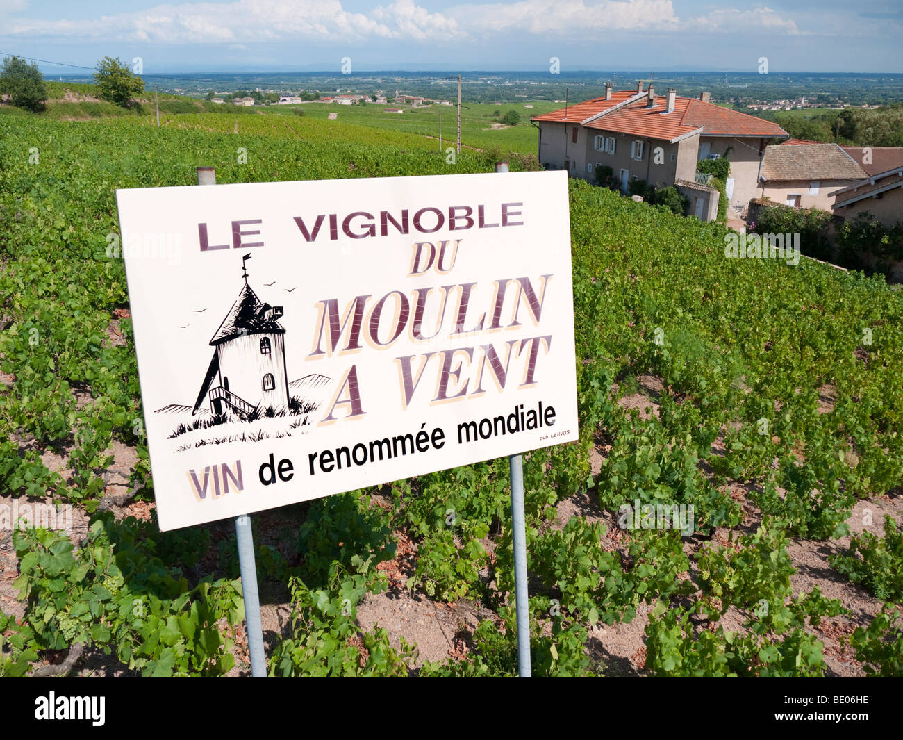 A signboard in a vineyard advertises the renowned Beaujolais wine of Moulin à Vent. - Stock Image