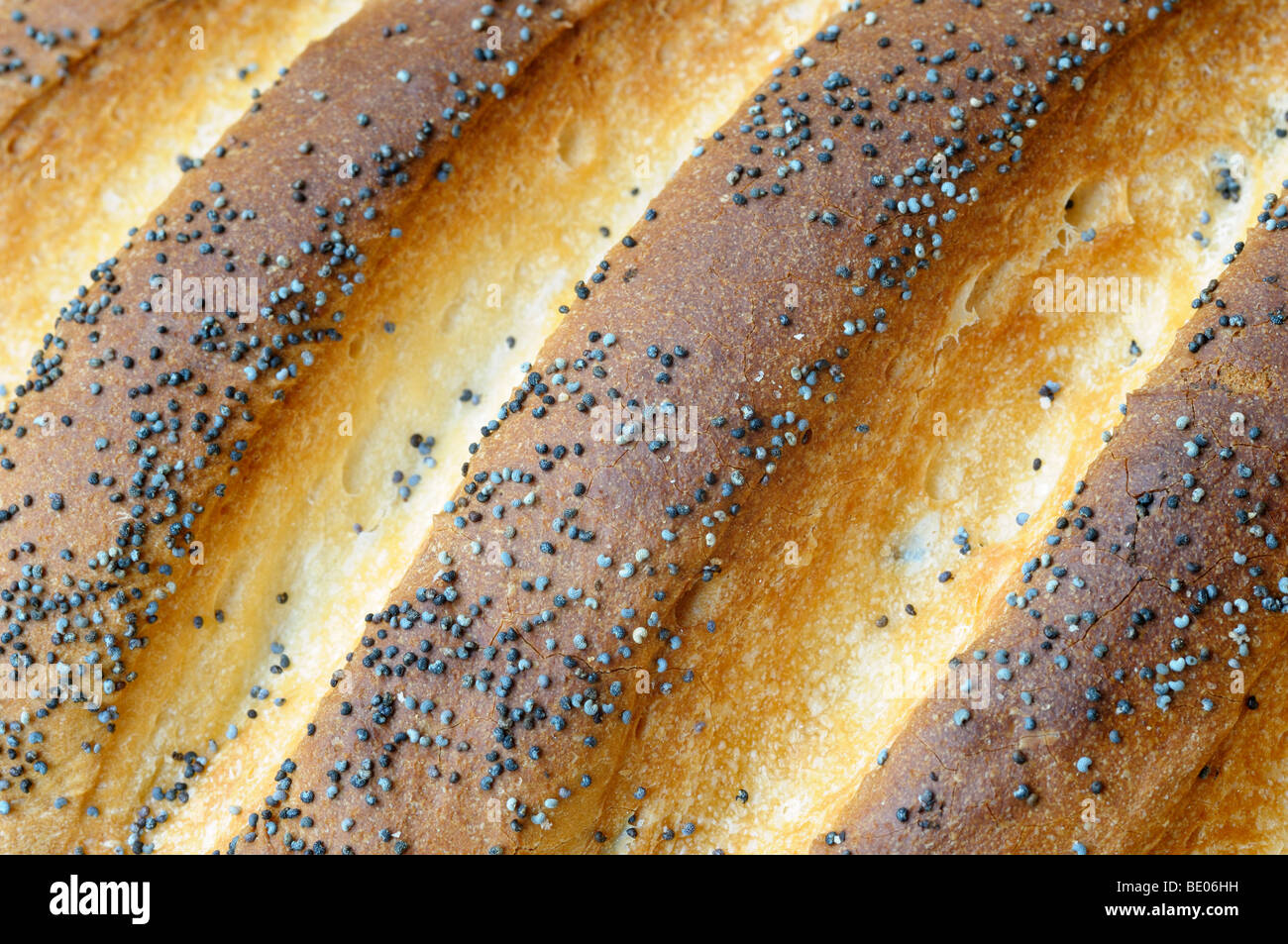 A loaf of poppy seed bloomer bread - Stock Image