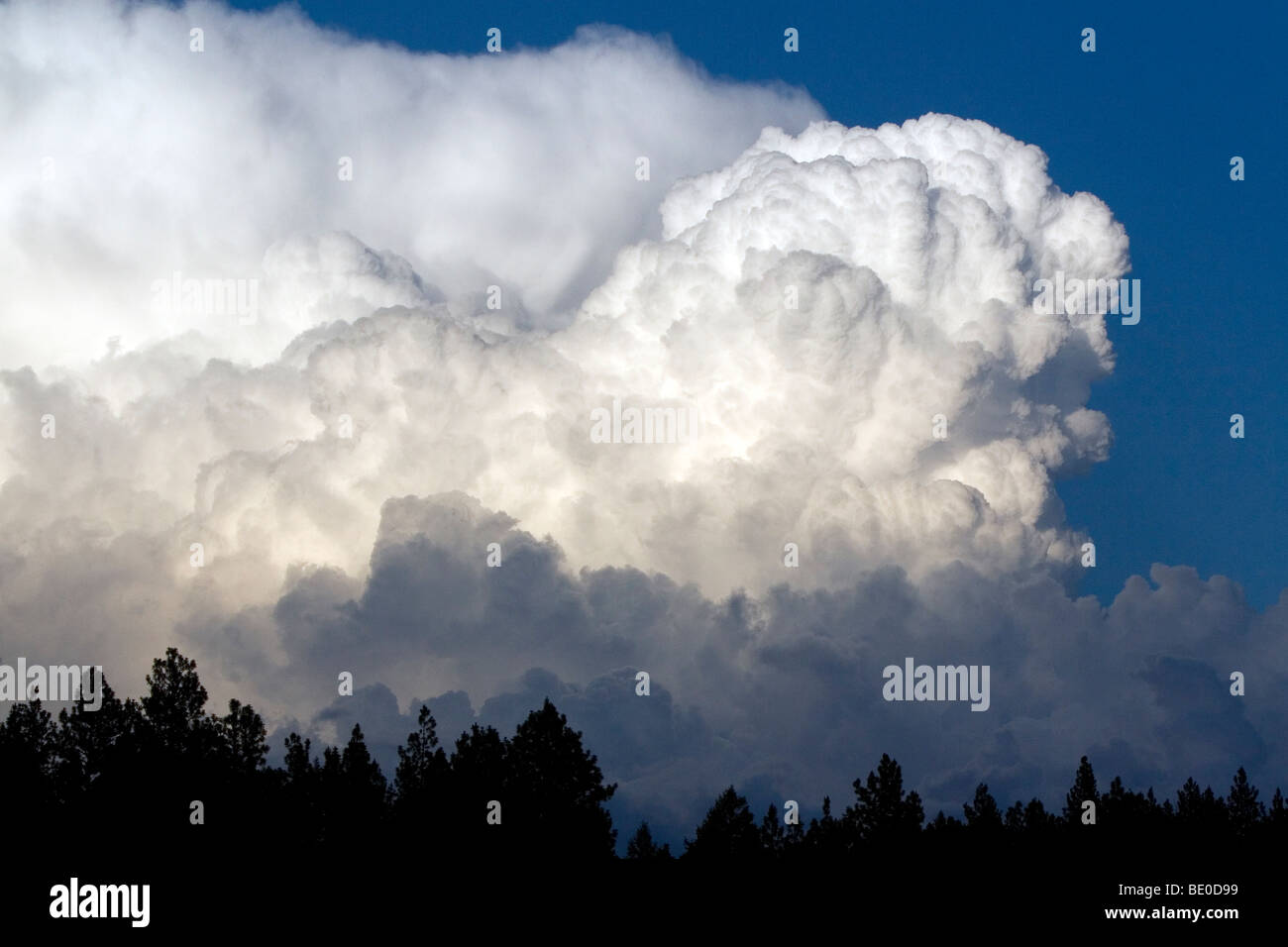 Cumulonimbus thunderstorm clouds form near Cascade, Idaho, USA. - Stock Image