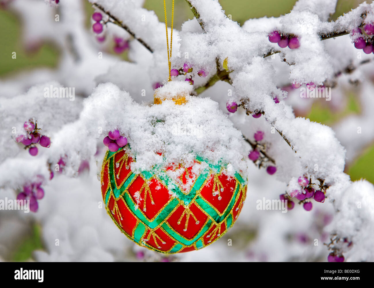 Christmas tree ornament in snow covered Beauty Bush with purple berries. - Stock Image