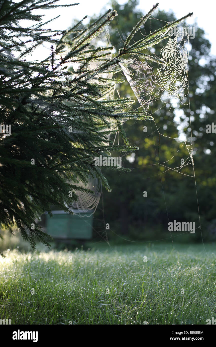 misty spiderwebs, morning mist, early morning, Estonia, Saaremaa - Stock Image